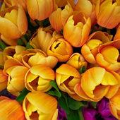 Dark yellow fake tulips — Stock Photo