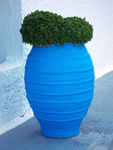 Basil in blue jar — Stock Photo