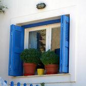 Blue shutters window and basil flowerpots — Stock Photo