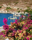 Bougainvillea and boats in a Greek island — Stock Photo
