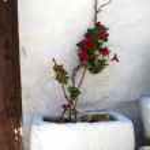Red flower in stone flowerpot — Stock Photo #21451877
