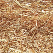 Stock Photo: Straw closeup