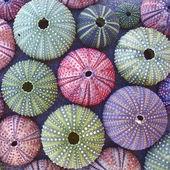 Verscheidenheid van kleurrijke zee-egels op het strand — Stockfoto