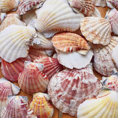 Variety of colorful sea shells closeup — Stock Photo