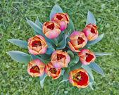 Ramo de tulipanes coloridos — Foto de Stock