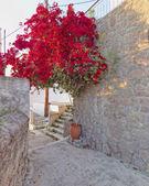 Red bougainvillea in mediterranean village street — Stockfoto