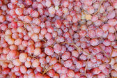 Rose wine grapes — Stockfoto