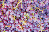 Red wine grapes, — Foto Stock