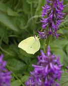 花卉特写镜头上的蝴蝶 — 图库照片