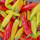 Colorful hot chili peppers — Stock Photo