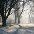 Winter in the Park — Stock Photo
