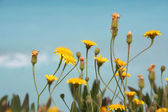 Mediterranean Spring — Stock Photo