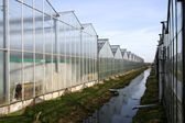 Greenhouses — Stock Photo
