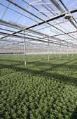Greenhouse Plants — Stock Photo