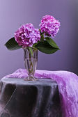 Hortensia flowers in glass vase — Stock Photo