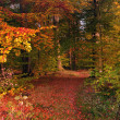 Autumn forest — Stock Photo #14128768