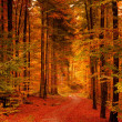 Autumn forest — Stock Photo #14128769
