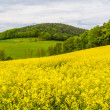 Landscape with yellow rapeseed field  — Stock Photo #41307279