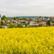 Landscape with yellow rapeseed field  — Stock Photo #41307555