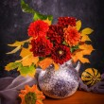 Autumn chrysanthemum flowers — Stock Photo #51347187