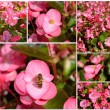 Pink begonia — Stock Photo