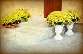 Input staircase with yellow flowers vases — Stock Photo
