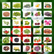 Organic Agriculture — Stock Photo