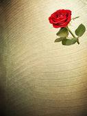 Texturas de papel de flor. raster — Foto Stock