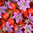 Stock Photo: TibetGoji berries
