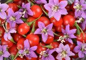 Tibetan Goji berries — Stock Photo