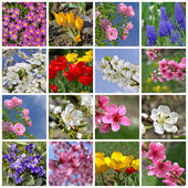 Collage of beautiful spring flowers — Stock Photo