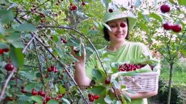 Women picked cherries — Stock Video