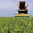 Stock Video: Peas harvester