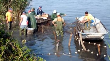 Pulling fishing nets — Stock Video