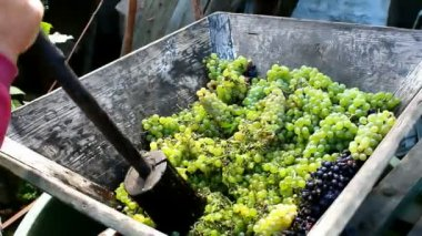 Squeezing grapes — Stock Video