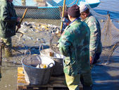 Workers in the fisheries — Stock Photo