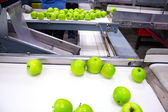 Apples in a Packing Plant — Stock Photo