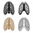 Human rib cage symbols - Stock vektor