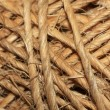 String rope texture — Stock Photo