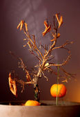 Dying orange tree with last orange — Stock Photo