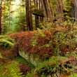 Fallen Redwood Tree Lies Decaying On Forest Floor — Stock Photo