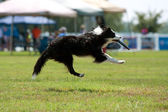 Dog Goes Airborn To Catch Frisbee In Mouth — Stock Photo