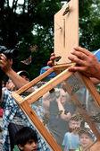 Spectators Watch Release Of Butterflies At Summer Festival — Stock Photo
