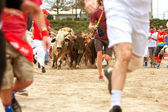 People Run Alongside Stampeding Bulls At Unique Georgia Event — Stock Photo