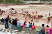 Motion Blur Of People Running With Bulls As Spectators Watch — Stock Photo