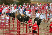 Hundreds Run With The Bulls At Georgia Event — Stock Photo