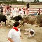 ������, ������: Steer Leaps Over Man Trampled In Georgia Bull Run