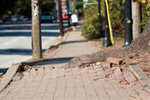 Tree Root Pushes Through Bricks Of Sidewalk In Urban Area — Stock Photo