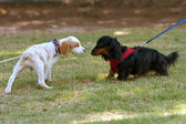 Two Cute Dogs Sniff And Check Each Other Out — Stock Photo