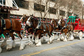 Budweiser Clydesdales Trot In St. Patrick's Parade — Stock Photo